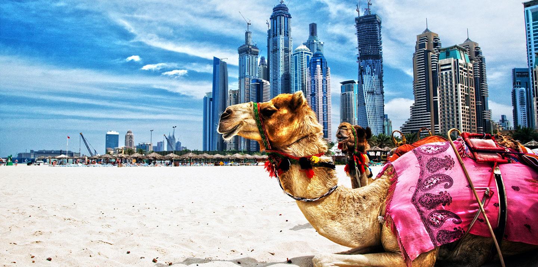 International Moving Dubai