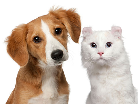 How you can move your pets Internationally?